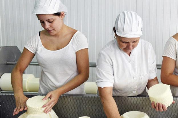 Taller de elaboración de queso
